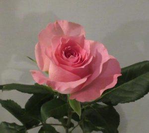 バラを贈ろう!PART2